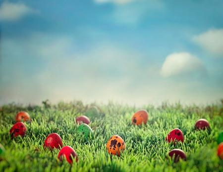 Easter eggs in spring grass. Easter hunt. Easter design background Standard-Bild