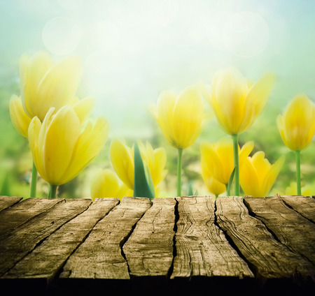 Easter background with tabletop. Spring Flowers background. Wood table with tulips
