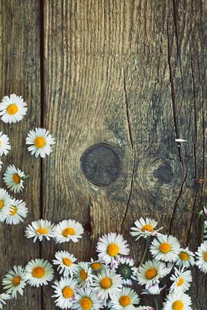 Fresh daisies on wood photo