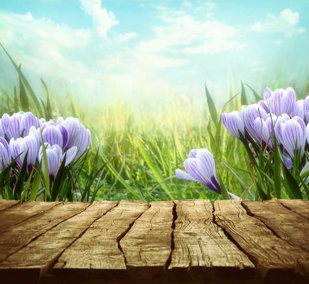Springtime Tabletop with spring flowers Standard-Bild