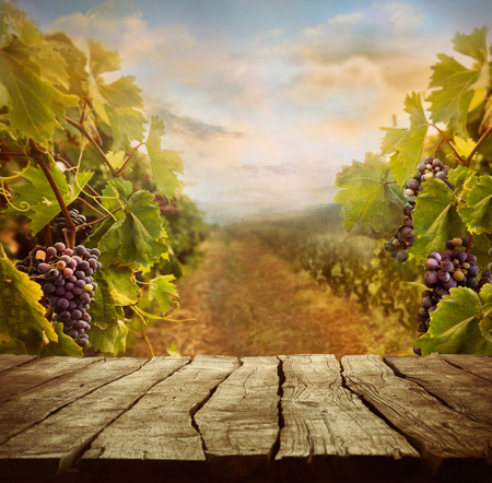 Vineyard tabletop design with vineyard and empty display Imagens