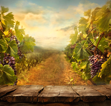 landscape scene: Vineyard tabletop design with vineyard and empty display Stock Photo