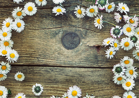 field of daisies: Spring background. Fresh daisies on wood. Nature background with copy space Stock Photo
