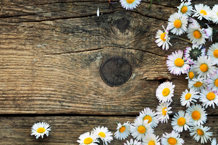 Fresh daisies on wood with copy space photo