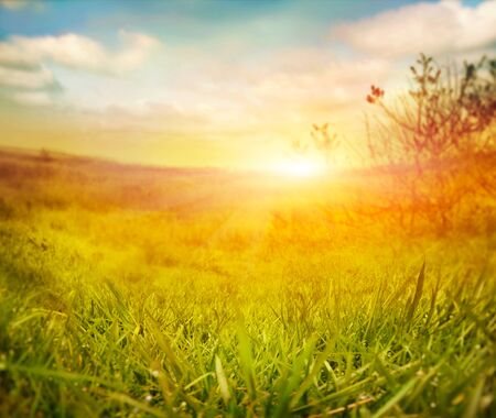 summer nature: Abstract nature background. Spring grass. Blur background with spring or summer landscape. Summer meadow