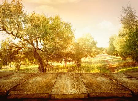 Wood table. Olive orchard. Olive oil production. Olive trees landscape Standard-Bild