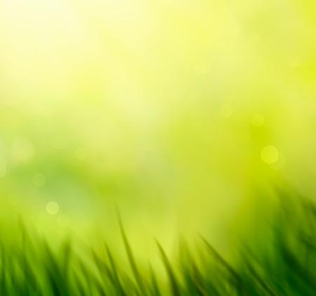春の草。背景をぼかし。夏の自然。ボケは背景をぼやけています。