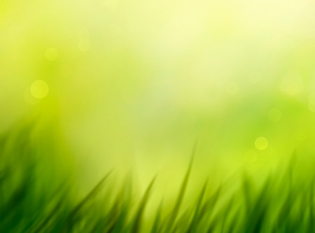 summer nature: Spring grass. Blur background. Summer nature. Bokeh blurred background.