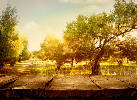 Olive orchard.Wood table. Olive oil production. Olive trees landscape