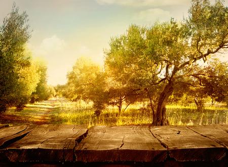 Olive orchard.Wood Tisch. Olivenölproduktion. Olivenbäumen Landschaft