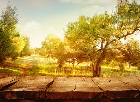 Olijfboomgaard Stockfoto