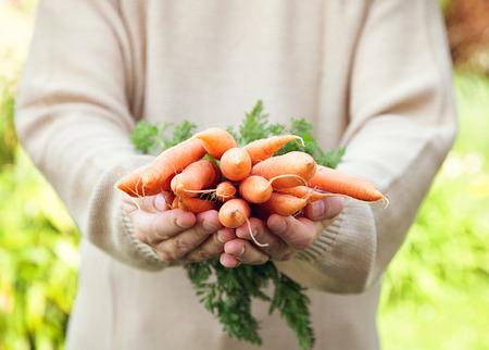 ?  ? carrot: Zanahorias orgánicas frescas en manos de los agricultores Foto de archivo