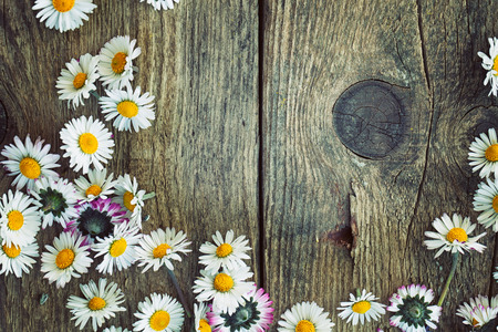 Spring background. Fresh daisies on wood. Nature background with copy space Archivio Fotografico