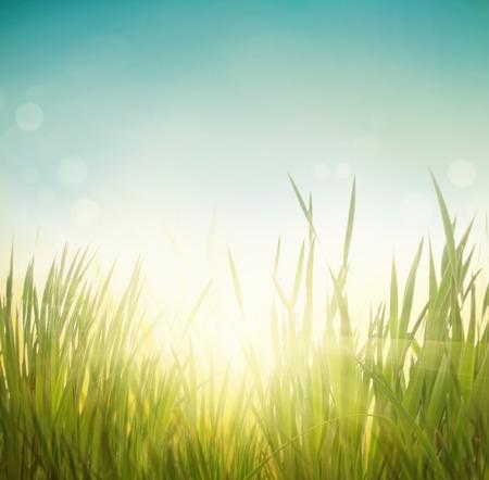 Spring grass. Blur background. Summer nature. Bokeh blurred background.