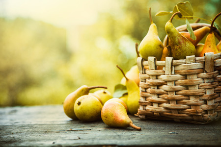 autumn harvest: Autumn nature concept. Fall pears on wood. Thanksgiving dinner