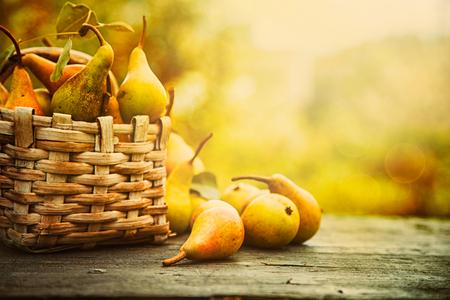 canastas de frutas: Concepto de naturaleza de otoño. Caída peras en la madera. cena de Acción de Gracias
