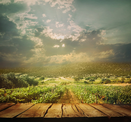 vineyard: Wooden table. Autumn design with vineyard and empty display. Space for your montage. Autumn grapes harvest