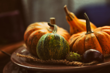 dynia: Jesień tabeli z dyni. Dzień Dziękczynienia i dekoracji jesienią. Zdjęcie Seryjne