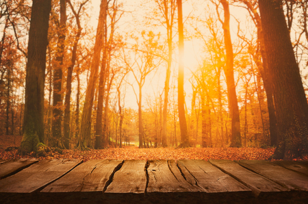 temporada: Mesa de madera. Diseño del otoño con las hojas que caen en el bosque y la pantalla vacía. Espacio para su montaje. Fondo temporada de otoño Foto de archivo