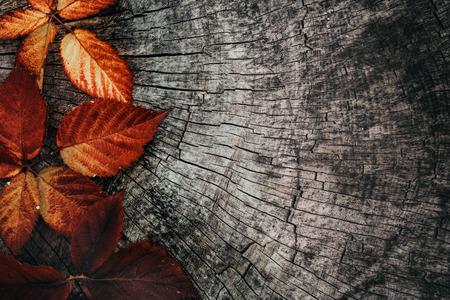 Herbstblätter. Herbst rote Blätter auf Baumrinde. Natur Hintergrund Lizenzfreie Bilder