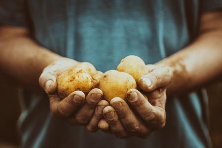 有機野菜。新鮮な収穫野菜で農民の手。新鮮なバイオ ジャガイモ