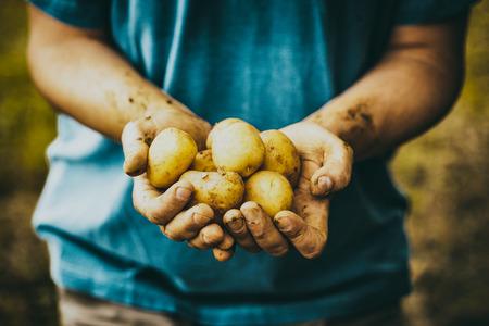 Organic vegetables. Farmers hands with freshly harvested vegetables. Fresh bio potatoes