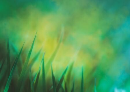 nature green: Spring background.Grass  with copyspace.Floral background.Nature bokeh