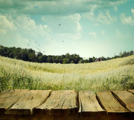 wood grass: Spring tree  background with table. Grass and cloudscape art Design. Wood planks with nature Stock Photo