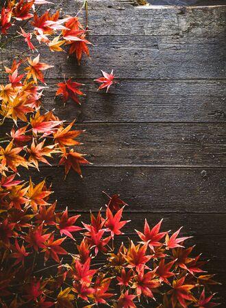 秋の紅葉。秋の紅葉は、木の上。自然の背景 写真素材 - 61520670