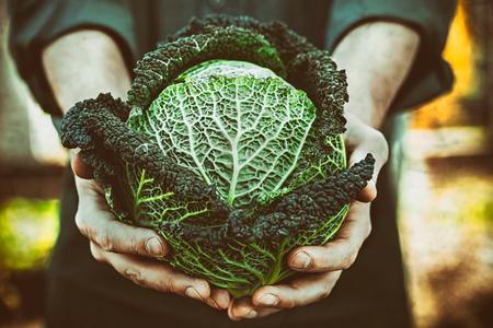 Organische groenten. Boeren handen met vers geoogste groenten. Verse biologische boerenkool. Stockfoto