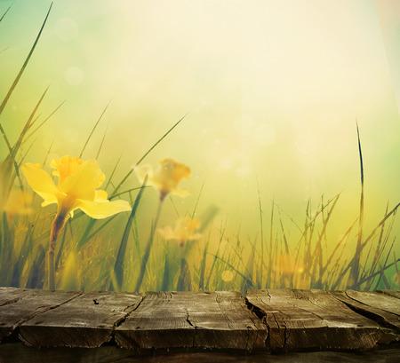 Daffodil florale voorjaar achtergrond. Pasen Lente Bloemen. Day gift elegante Moederdag. Springtime groene background.Wood lijstachtergrond