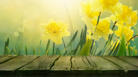 green flowers: Daffodil floral spring background. Easter Spring Flowers. Elegant Mothers Day gift. Springtime green background. Wood table. Wooden table with background