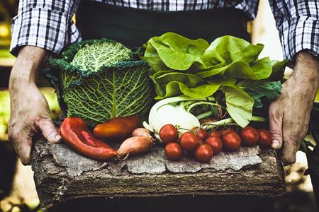 Organic vegetables. Farmers hands with freshly harvested vegetables. Fresh organic lettuce. Zdjęcie Seryjne