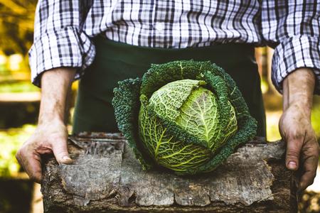 有機野菜。新鮮な収穫野菜で農民の手。新鮮な有機ケール