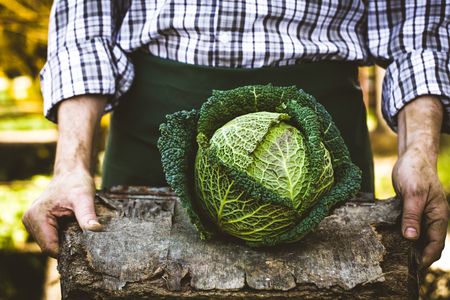 Organic vegetables. Farmers hands with freshly harvested vegetables. Fresh organic kale Stockfoto