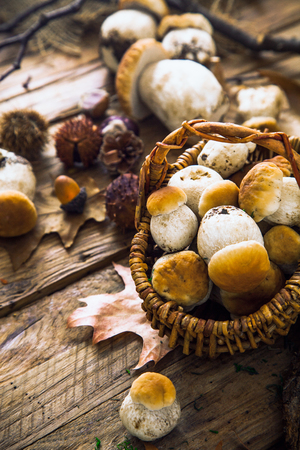 Mushroom  over Wooden Background. Autumn Cep Mushrooms on wood. Autumn forest fruit Imagens