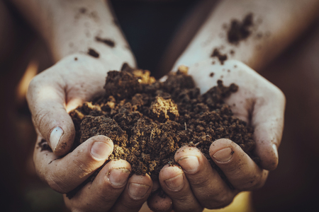 Gardener with dirt for planting. Spring garden. Plant seedling in farmers hands. Stock Photo