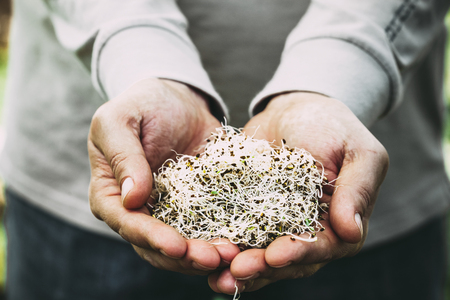 Heathy eating food. Alfalfa sprouts in farmers hands Stockfoto