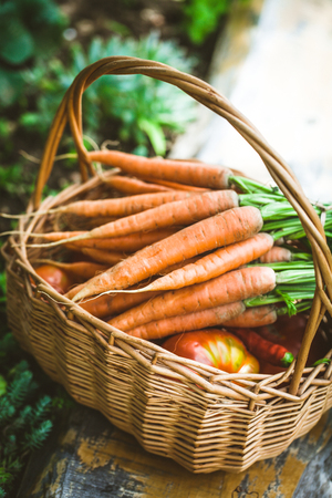 Fresh carrots in basket 스톡 콘텐츠