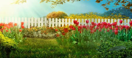 Spring garden. Red tulips in garden Spring grass with flowers Banco de Imagens - 123837601