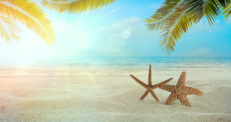 Beach summer background. Summer holidays wih sand, star fish and palm leaves. Sandy beach 스톡 콘텐츠