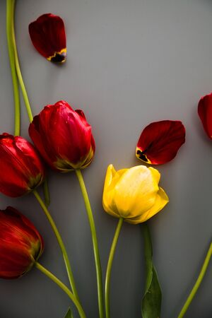 Red Tulips on table. Spring Easter flowers.