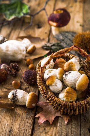 Mushroom  over Wooden Background. Autumn Cep Mushrooms on wood. Autumn forest fruit Standard-Bild