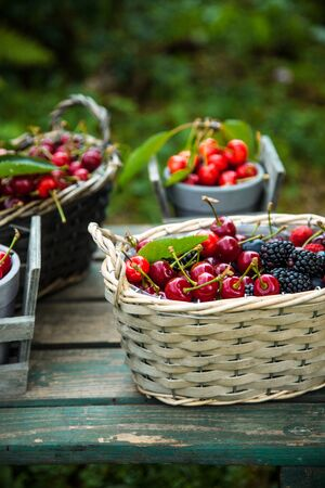 Fresh forest fruit on wood. Fresh organic fruit. Red cherries, blueberries and blackberries Standard-Bild