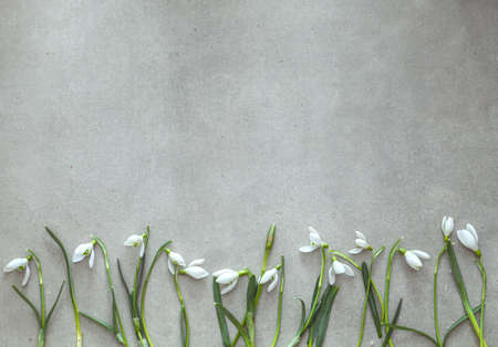 Spring background  and snowdrop flowers. Easter background. Overhead flatlay Easter Standard-Bild