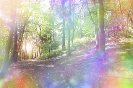 woodland scenery: Fantasy rainbow bokeh woodland  Stock Photo