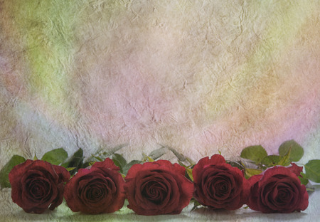 Five roses in a row on parchment background  photo