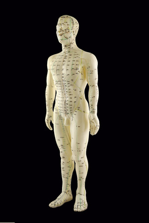 Agopuntura Modello - Medicina Tradizionale Cinese Archivio Fotografico - 29026865