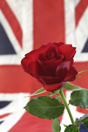 English Rose and Union Jack           photo