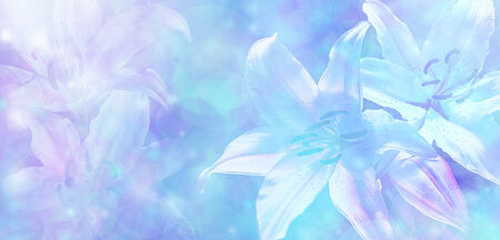 Light Blue Bokeh Wedding Lillies Banner photo